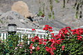 Fairy Meadows & Nanga Parbat picture eight.jpg