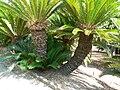 Fale - Giardini Botanici Hanbury in Ventimiglia - 631.jpg