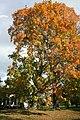 Fall - panoramio (6).jpg
