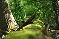 Fallen tree- P5185849.jpg