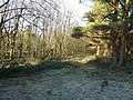 Farley Moor - Woodland Path - geograph.org.uk - 333838.jpg