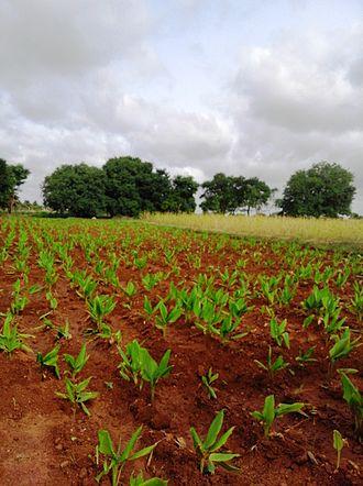 Mysore district - Farm at Konanur