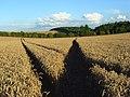 Farmland, Farnborough - geograph.org.uk - 928521.jpg