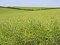Farmland above Broadmayne - geograph.org.uk - 847788.jpg