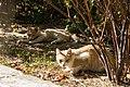 Feral cats in Divnomorskoe, Russia.jpg