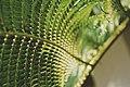 Fern Leaves (Unsplash).jpg