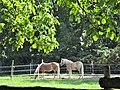 Ffm-Niederursel, Pferdekoppeln (1).jpg