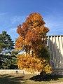 Fiery Foliage (16668196122).jpg
