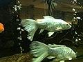 Fish aquarium.jpg