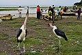 Fish market at Lake Hawassa (5) (29132040155).jpg