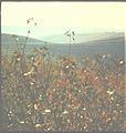 Flickr - Ion Chibzii - Village Hiliutsy, Ryshkansky area. 80th years..jpg
