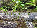 Flickr - archer10 (Dennis) - Belize-1105.jpg