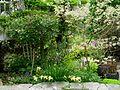 Flickr - brewbooks - Our Garden - May, 2008 (19).jpg