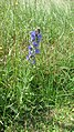 Flora of Middle Street Meadows.jpg