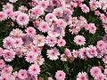 Flower-center142515.jpg