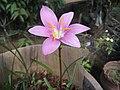 Flower 34.jpg