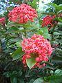 Flower dsc07297.jpg
