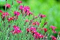 Flowers (35141578472) (2).jpg