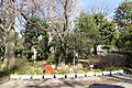 Flowers - Arisugawa-no-miya Memorial Park - DSC06845.JPG