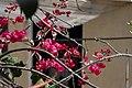 Flowers - Israel (9).jpg