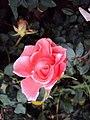 Flowers - Uncategorised Garden plants 164.JPG