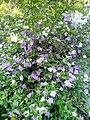 Flowers in Sri Lanka.jpg