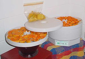 Food dehydrator - Electric food dehydrator with mango and papaya slices being dried.