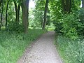 Footpath - Shelf Hall Park Woods - geograph.org.uk - 1343224.jpg
