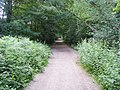 Footpath in the woods - geograph.org.uk - 879650.jpg