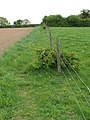 Footpath skirting stock fence - geograph.org.uk - 1294913.jpg