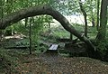 Footpath under tree trunk arch - geograph.org.uk - 248573.jpg