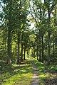 Forêt de Stambruges 02.jpg