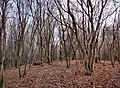 Forest, november - panoramio - paulnasca (4).jpg