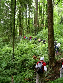 About a dozen people are strung out single-file along a narrow forest path. Some are bent over and appear to be reaching into the ferns and other understory plants along the trail.