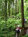 Forest park volunteers rerouting wildwood trail P2841.jpeg
