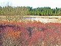 Forest pond - geograph.org.uk - 163193.jpg