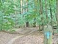 Forst Grunewald - Pfadgabelung (Grunewald Forest - Path Fork) - geo.hlipp.de - 41375.jpg