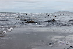 Fossilised tree stumps between Borth and Ynys Las Wales 03.JPG
