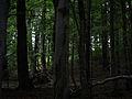 Fragment Sudeckiego lasu naturalnego w rezerwacie Puszcza Śnieżnej Białki.JPG
