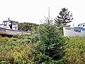 Freetown, PEI (7916547026).jpg