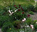 Front garden ~ afternoon - Flickr - peganum.jpg