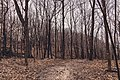 Frontenac State Park Hiking Trail Minnesota (32605586343).jpg
