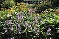 Göteborgs botaniska trädgård-IMG 5563.jpg