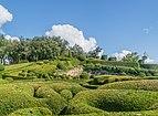 Garden of Marqueyssac 12.jpg