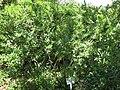 Gardenology-IMG 7878 hunt10aug.jpg