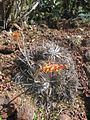 Gardenology.org-IMG 2465 hunt0903.jpg