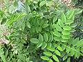 Gardenology.org-IMG 2804 rbgs11jan.jpg