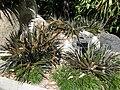 Gardenology.org-IMG 9281 rbgm10dec.jpg