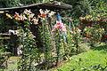Garten Juli 2014 (15466606706).jpg