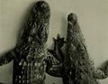 Gator&croc.png